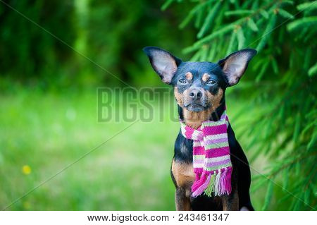 Beautiful Dog, A Puppy In A  Scarf  Sitting On A Background Of Green Foliage. Space For Text. Lovely