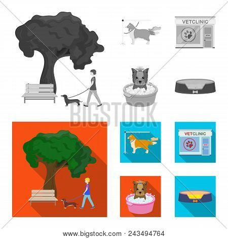 Walking With A Dog In The Park, Combing A Dog, A Veterinarian Office, Bathing A Pet. Vet Clinic And