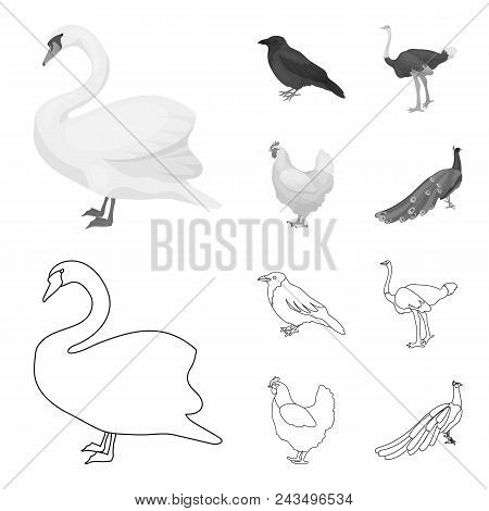 Crow, Ostrich, Chicken, Peacock. Birds Set Collection Icons In Outline, Monochrome Style Vector Symb