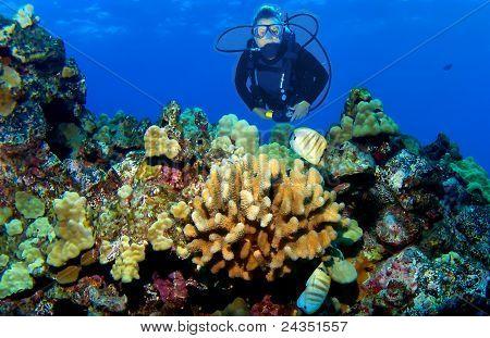 Scuba Diver on a Kona Reef