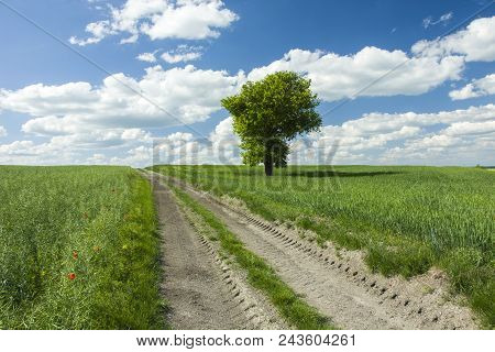 Rural Road Through Green Fields Towards The Horizon, Lonely Tree  And Blue Sky