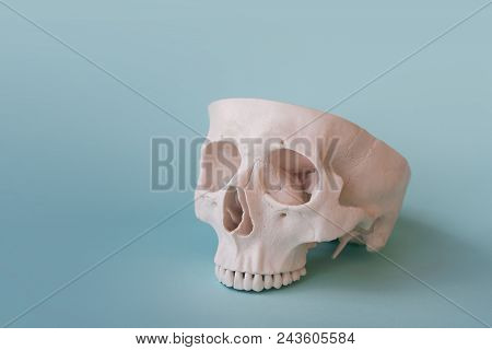 Human Skull On Clear Blue Background. Open Skull Without Lower Jaw. Medical Concept, Free Space For