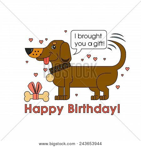 A Little Cute Dog Of The Breed Of Dachshund Congratulates On His Birthday And Brought The Best Gift.