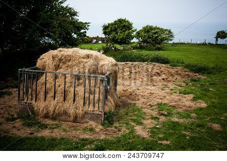 Fodder Rack With Hay For Animal In The Farm. A Rack With Harvested Hay In The Green Field Countrysid