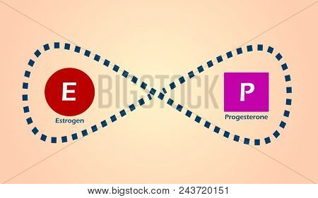 Estrogen and progesterone fluctuation concept