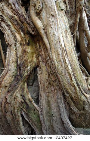 Strom, který roste nad vymodelované Buddha v Ta Prohm