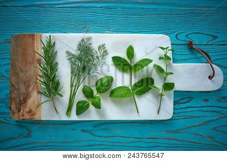 Aromatic herbs culinary plants rosemary fennel oregano mint and basil on turquoise wood