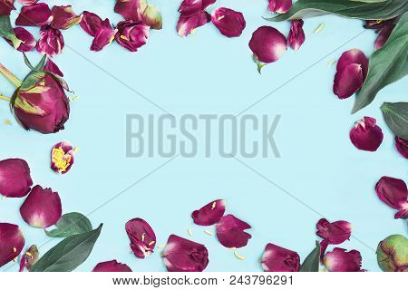 Petals Of Flowers On A Turquoise Background. A Frame Of Petals, Buds And Leaves Of Pions On A Bright