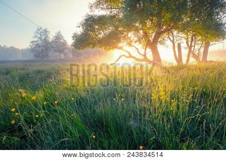 Summer Background. Summer Nature Early In The Morning. Colorful Mist In Morning Sunlight Over Meadow
