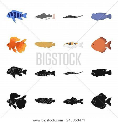 Discus, Gold, Carp, Koi, Scleropages, Fotmosus.fish Set Collection Icons In Black, Cartoon Style Vec