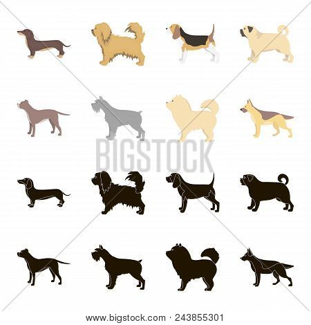 Pit Bull, German Shepherd, Chow Chow, Schnauzer. Dog Breeds Set Collection Icons In Black, Cartoon S