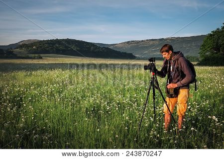 Photographer Takes A Pictures Of A Field With Chamomiles