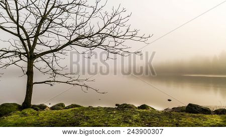 Foggy Morning Along Local City Park Shoreline