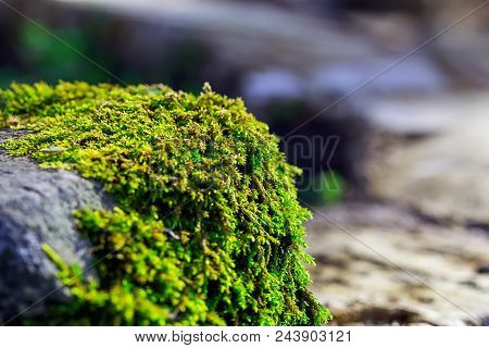The Moss Is On A Stone. Green Moss. The Concept Of Nature And Beauty. Horizontal Image. Close-up