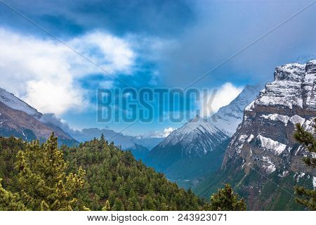 Mountain Landscape With Coniferous Forest And Snowy Mountains, Nepal.