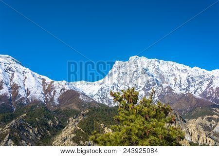 Snowy Mountains And A Coniferous Tree, Nepal.