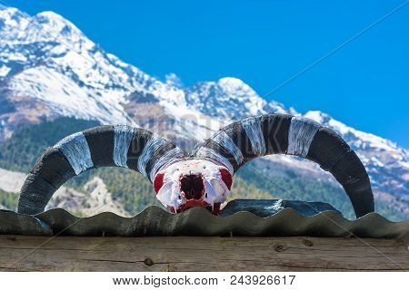 Large Yak Horns Against Snowy Mountains In The Himalayas, Nepal.