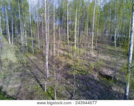Drone View On The Deciduous Wood At The Beginning Of Spring With The First Foliage