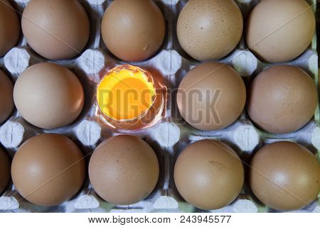 Eggs, One Egg It Is Illuminated Close Up In Sunny Day