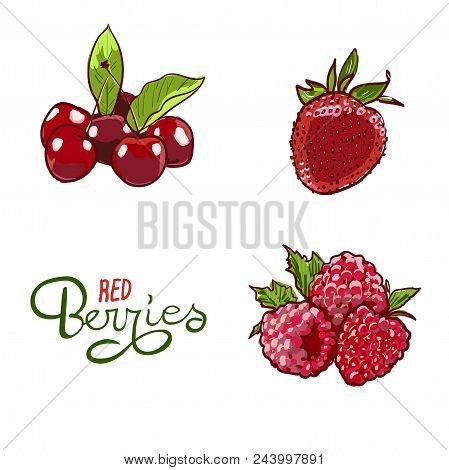 Berry Hand Drawn Vector Set. Berry Colorful Marker Illustration. Berries Engraving Doodle Sketch Etc