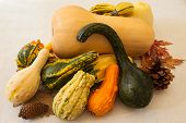 Collected edible and ornamental squashes and gourds, along with autumn leaves and pine cones, representing a bountiful harvest poster