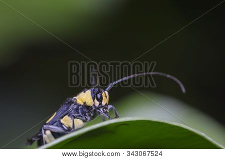 Insects On Green Leaves On A Natural Background