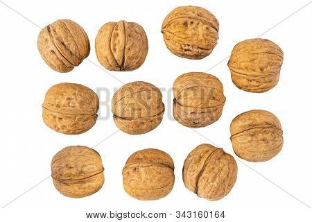 Walnut On The White Background. Close Up Shot Of Whole Walnut Isolated On White Background. Group Of