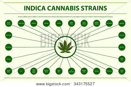 Indica Cannabis Strains Horizontal Infographic Illustration About Cannabis As Herbal Alternative Med