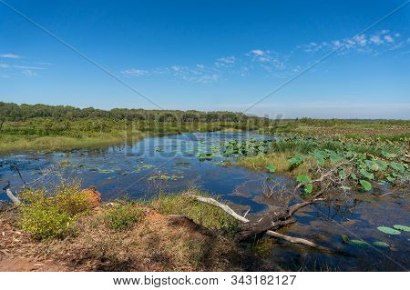 Beautiful Nature Landscape Of Wetlands With Water Lilies And Forest In The Distance. Wetlands Ecosys