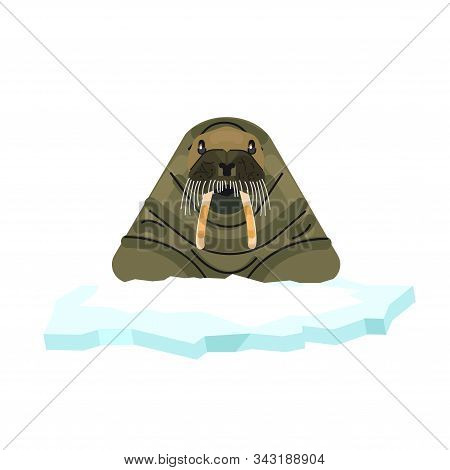 Arctic Walrus On A White Background. Walrus Illustration. Vector Animal Of The Arctic
