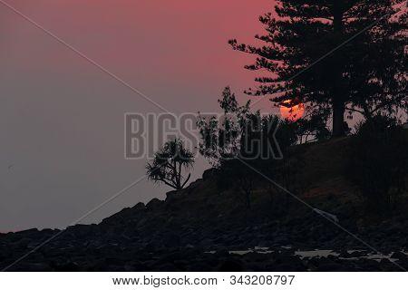 A Red Sunrise In Smokey Skies Through Pine Trees At Burleigh Headland, Gold Coast.