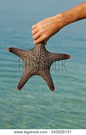 Starfish In Thailand