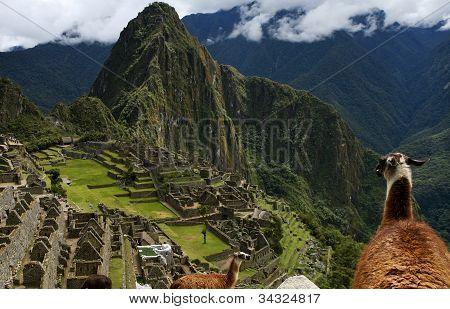 Machu Picchu, Peru, with Llamas