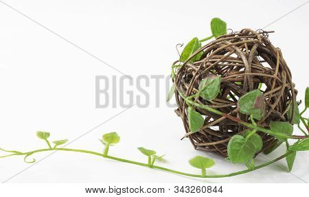 Ball Of Rotan Braided By A Green Plant, Vine, Isolated On A White Background. The Concept Of Conserv
