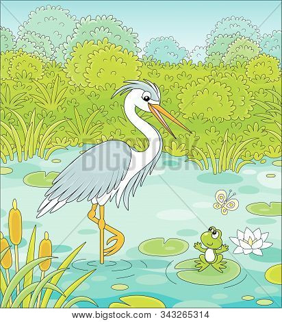 Big Grey And White Heron And A Small Green Frog On A Blue Lake Among Cane, Grass And Bushes Of A Sum
