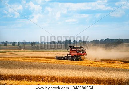 Red Harvest Gathering Combine Working In Field . Harvester Agriculture Machine In Golden Ripe Wheat