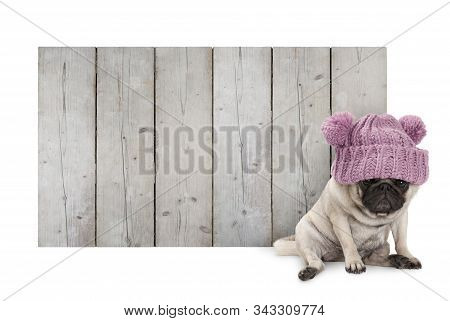 Cute Pug Puppy Dog With Pink Knitted Winter Hat, Sitting In Front Of Blank Wooden Fence Promotional