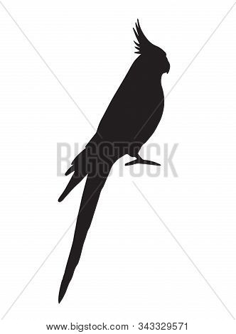 Vector Black Corella Cockatiel Parrot Silhouette Isolated On White Background