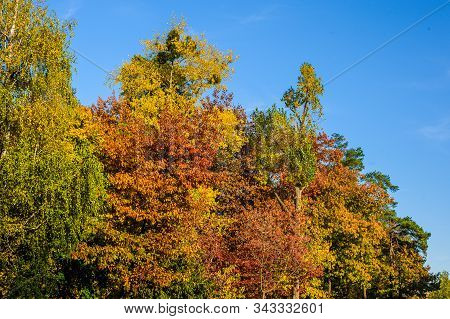 Leaves On Trees Of Yellow, Red And Green In The Deciduous Forest In Autumn Against A Blue Sky