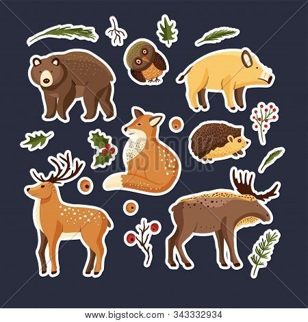 Hand Drawn Forest Animal Vector Set In A Flat Style. Woodland Cartoon Icon Funny Collection With Owl