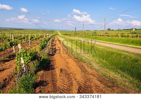 Countryside Agricultural Landscape. Country Road Through Vineyards. Countryside Landscape. Countrysi