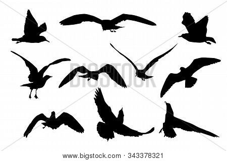 Set Of Black Flying Seagull Silhouettes Isolated On White Background. Collection Of Cartoon Seagulls