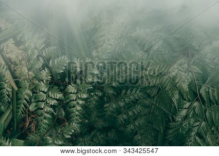 Vertical Garden With Tropical Green Leaf With Fog And Rain, Dark Tone