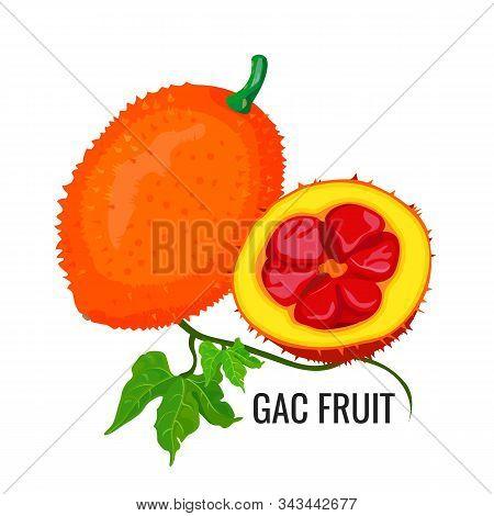 Gac Fruit. Healthy Orange Vegetarian Jackfruit Food. Vector