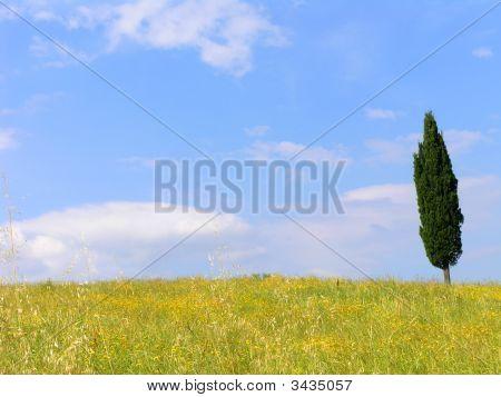 Italian Trees 1
