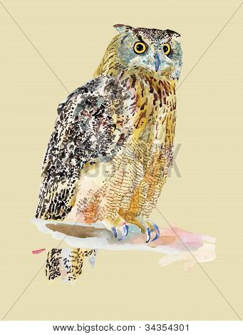 Original Watercolor Painting Of Bird, Owl On A Branch