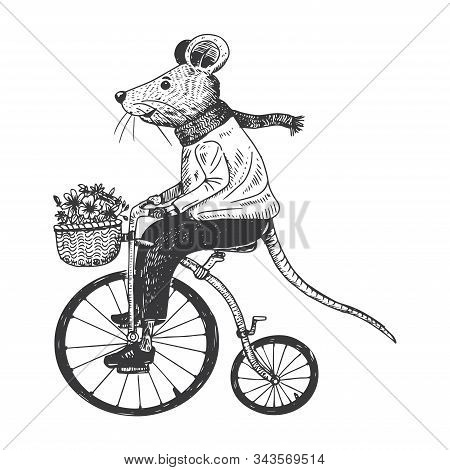 Illustration Of Mouse On Penny Farthing, Vector