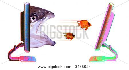 Fish  Leaving Out Of Computer
