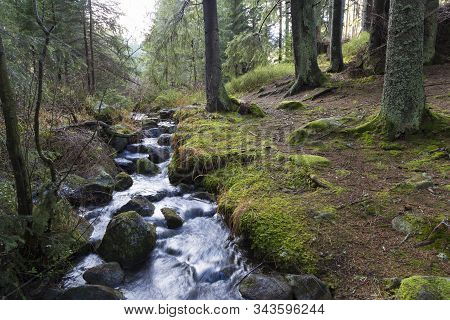 Fast River Flows In Coniferous Mountain Forest Among Mossy Stones. River Smrečianka.  Western Tatras