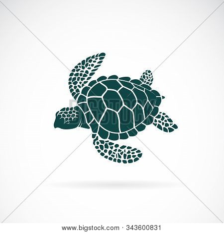 Vector Of Turtle Design On A White Background. Wild Animals. Underwater Animal. Turtle Icon Or Logo.